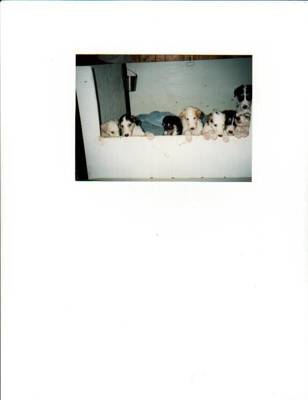 pupsbox.jpg